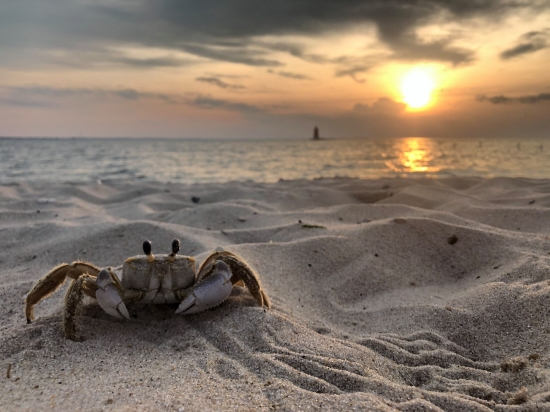"Photo of ""Can't Be Crabby"" by Morgan McGinnis"