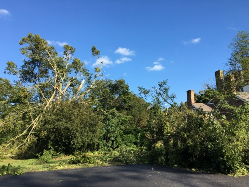Photo of Ddowned and damaged trees at Belmont Hall following Tropical Storm Isaias.