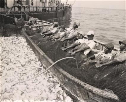 Photo of watermen hauling in a menhaden catch.
