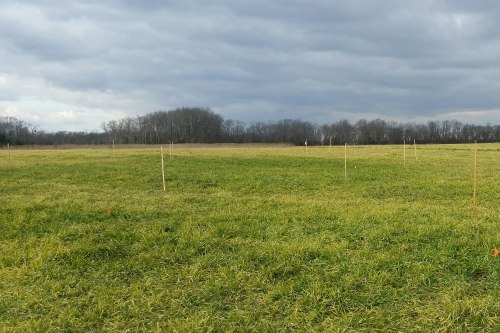 Photo of a field staked out as part of the search for the burial ground at the John Dickinson Plantation.